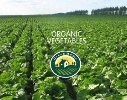 绿色家园有机蔬菜品牌设计
