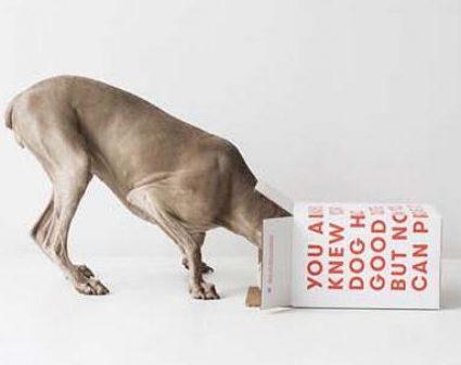 ollie宠物粮品牌标识及视觉设计