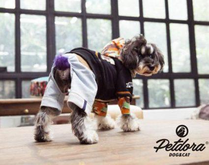 petdora宠物品牌LOGO设计