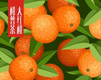 大红柑普洱年轻概念包装设计