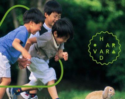 HARVARD哈佛幼稚园品牌设计