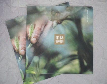 雨林茶品牌折页设计欣赏